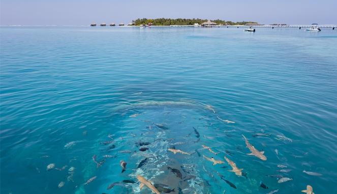 ithaa-undersea-restaurant-from-above-1063x614